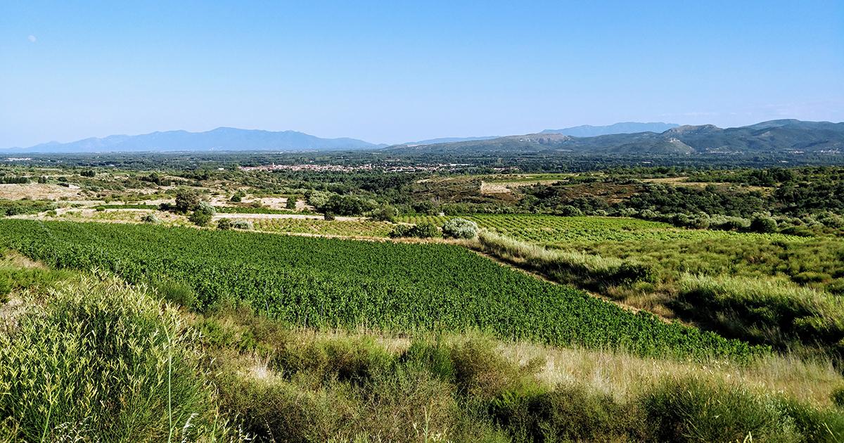 Roussillon: il risveglio del gigante